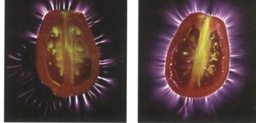 Cooked Tomato, Raw Tomato, with different energy fields: Kirlian photography, Photo by David Wolfe